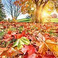 Autumn Fall Landscape In Park by Michal Bednarek
