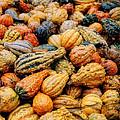 Autumn Gourds by Joann Vitali