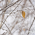 Autumn Leaf by Jim Corwin