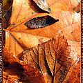 Autumn Leaves 1 by Helene U Taylor