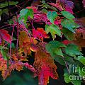 Autumn Leaves by Dale Powell