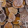 Autumn Leaves by Jim Corwin