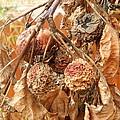 Autumn by Muntean Floare