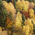Autumn by Patrick Kessler