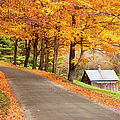 Autumn Road by Brian Jannsen