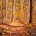 Autumn Trail by Brian Jannsen