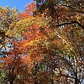 Autumn Trees by Frank Romeo