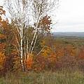 Autumn With Birch by Nancie Johnson