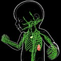 Baby's Lymphatic System by Pixologicstudio