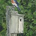 Backyard Bluebird 2 by Lucinda V VanVleck