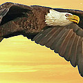 Bald Eagle At Sunset by Larry Linton