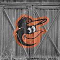 Baltimore Orioles by Joe Hamilton