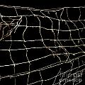 Barbed Wire by Bernard Jaubert