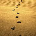 Beach Walker by Douglas J Fisher