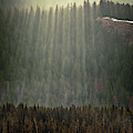 Beams Of Sunlight Shine Over Old Growth by Christopher Kimmel