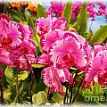 Beautiful Array Of Purple Butterfly Orchids by Yali Shi