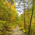 Beautiful Autumn Forest Mountain Stair Path At Sunset by Alex Grichenko