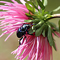 Beetle by Heike Hultsch