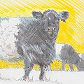 Belted Galloway Cows by Mike Jory