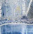 Birch Reflections by Alicia Fowler
