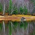 Birch Shoreline by Pat Now