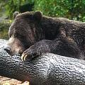 Black Bear by Mary Almond