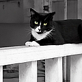 Black Cat by Carlos Diaz