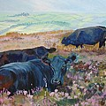 Black Cows On Dartmoor by Mike Jory