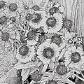 Black Eyed Susans by Alice Gipson