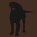 Black Labrador by Elizabeth Harshman