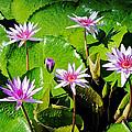 Blooming Flowers by Lars Lentz