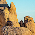 Boulders In A Desert, Joshua Tree by Panoramic Images