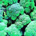 Broccolo by Linda Wild