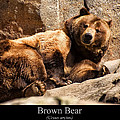 Brown Bear by Chris Flees