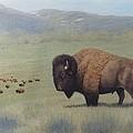 Buffalo In Yellowstone by Alan Suliber