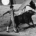 Bull Fight Matador Charging Bull Us-mexico  Border Town Nogales Sonora Mexico 1978-2012 by David Lee Guss