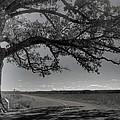 Burr Oak Tree by Jane Linders