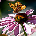 Butterfly Beauty by Cheryl Baxter