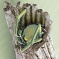 Caddisfly Larva, Sem by Steve Gschmeissner