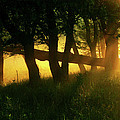 Cades Cove Sunrise by Douglas Stucky