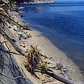 Calvert Cliffs State Park by Thomas R Fletcher