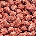 Caramelized Peanuts by Gaspar Avila