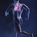 Cardiovascular Exercise by Science Picture Co