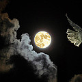 Caught By The Moon by Rob Mclean