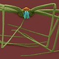 Cellar Spider (physocyclus Mexicanus) by Dennis Kunkel Microscopy/science Photo Library