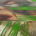 Cereal Fields From The Air by Guido Montanes Castillo