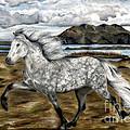 Charismatic Icelandic Horse by Shari Nees