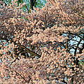 Cherry Blossoms In Pink And Brown by Cora Wandel