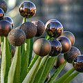 Christmas Cactus by Sheila Faryna