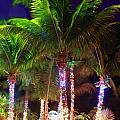 Christmas Palms by R B Harper